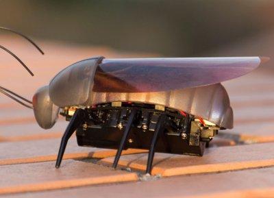 iHelicopters научила iPhone управлять насекомыми